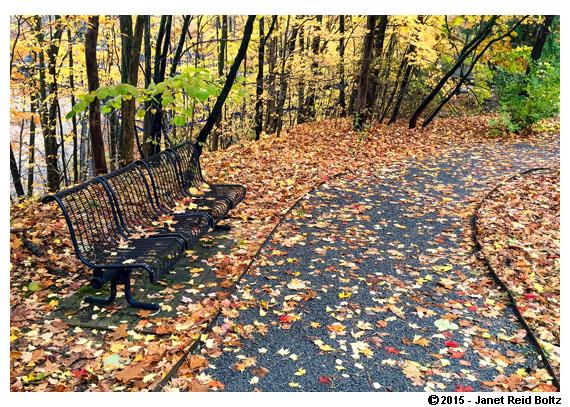 A pretty spot in GVSU's arboretum.