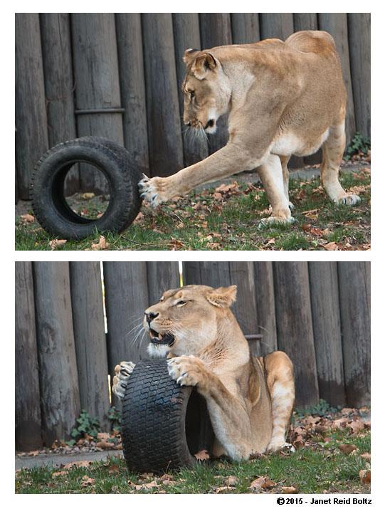 2015-11-08 - cleveland zoo5