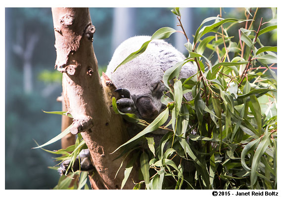 2015-11-08 - Cleveland Zoo