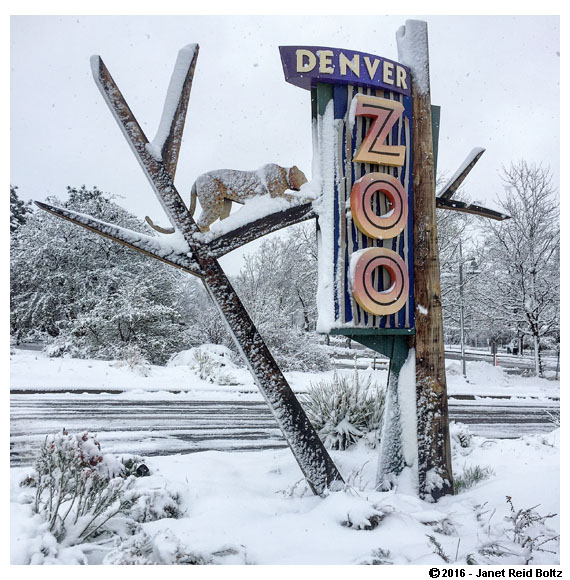 A snowy Denver Zoo