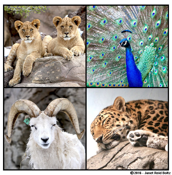 A sample of animals from the Denver Zoo