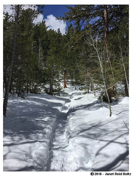 A snowy path at Golden Gate Canyon State Park