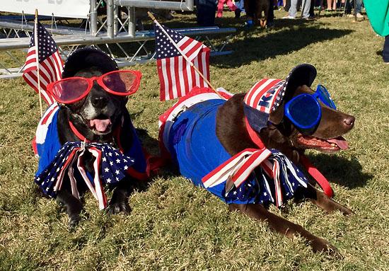 2016-11-11-richmond-marathon-dogs