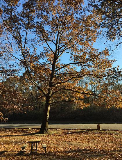 2017-11-24 - fri trees