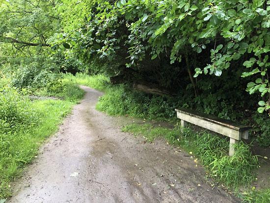 2019-07-27 - loopty loop trail2